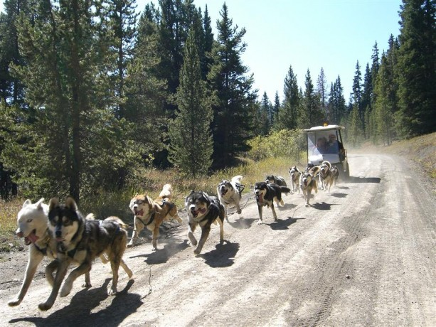 Breck Golf Cart Dog Sledding in Summer