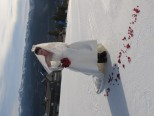 Rose petals on the slopes