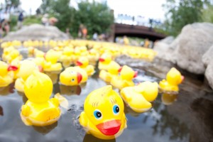RubberDucks_Breck_LaborDay